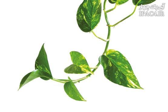 با این گیاهان آپارتمانی خود را در برابر آلودگی هوا بیمه کنید