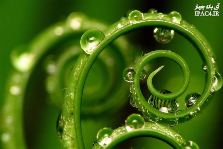 راجب مهندسی گیاهان چه میدانید؟